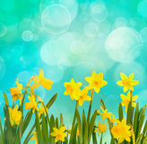 De lenteachtergrond met gele narcissen Stock Foto's