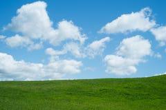 De lenteachtergrond, met gras Stock Foto