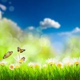 De lenteachtergrond met gras en camomiles Royalty-vrije Stock Foto