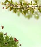 De lenteachtergrond met gras, vlinders en Royalty-vrije Stock Fotografie