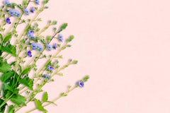 De lenteachtergrond met kleine purpere bloemen Decoratie in delic Stock Afbeelding