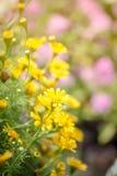 De lenteachtergrond met mooie gele bloemen Royalty-vrije Stock Fotografie