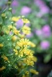 De lenteachtergrond met mooie gele bloemen Stock Fotografie