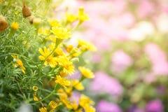 De lenteachtergrond met mooie gele bloemen Stock Foto's