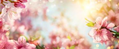 De lenteachtergrond met mooie kersenbloesems stock foto