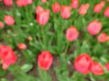 De lenteachtergrond met rode tulpen Stock Afbeelding