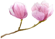 De lenteachtergrond met waterverftak van magnolia Hand getrokken botanische illustratie Stock Foto's