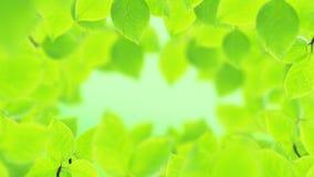De lenteachtergrond, natuurlijk kader van mooie groene bladeren stock videobeelden
