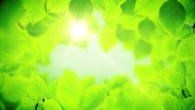 De lenteachtergrond, natuurlijk kader van mooie groene bladeren stock footage
