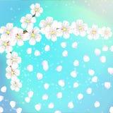 De lenteachtergrond van bloemen met abrikozenbloemblaadjes Stock Foto