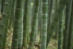 De lentebamboe in Yangtze-rivier royalty-vrije stock foto's