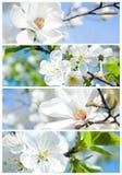 De lentebanners Stock Afbeeldingen