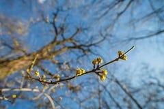 De lentebehang Royalty-vrije Stock Fotografie