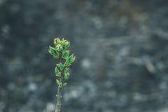 De lenteblad op de brunch macroachtergrond Royalty-vrije Stock Foto