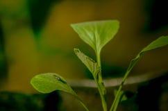De lentebladeren stock afbeelding