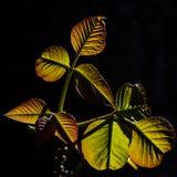 De lentebladeren Royalty-vrije Stock Afbeelding