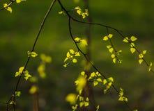 De lentebladeren Royalty-vrije Stock Foto's