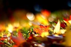 De lentebladeren stock fotografie