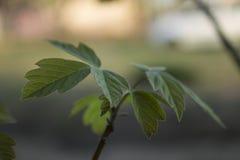 De lentebladeren Royalty-vrije Stock Fotografie