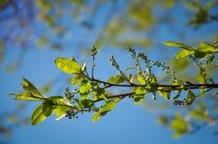 De lentebladeren in een zonnige dag stock foto