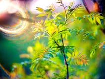 De lentebladeren en lensgloed Stock Foto's