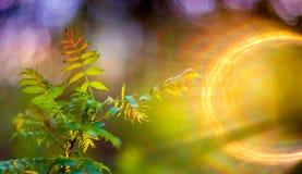 De lentebladeren en lensgloed stock fotografie