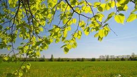 De lentebladeren, landschap stock videobeelden