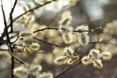 De lentebloei Royalty-vrije Stock Foto