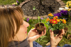 De lentebloei Stock Afbeelding