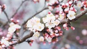 De lentebloei Stock Foto