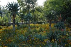 De lentebloei in Californië bij de Botanische Tuinen van Taft, Ojai C Royalty-vrije Stock Foto's
