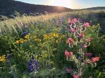 De lentebloei in de heuvels van Judea stock foto's