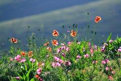 De lentebloem Royalty-vrije Stock Afbeeldingen
