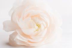 De lentebloem royalty-vrije stock afbeelding