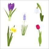 De lentebloem die met tulp, gele narcis, sneeuwklokje wordt geplaatst Royalty-vrije Stock Afbeelding