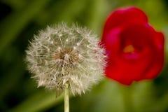 De lentebloem in een groen gras Royalty-vrije Stock Afbeeldingen