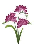De lentebloem - fresia Royalty-vrije Stock Foto's