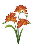 De lentebloem - fresia Royalty-vrije Stock Afbeeldingen