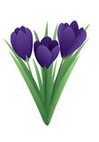 De lentebloem - krokus Royalty-vrije Stock Foto