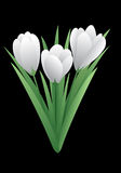 De lentebloem - krokus Stock Fotografie