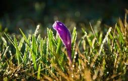 De lentebloem met de ochtend dev Royalty-vrije Stock Afbeeldingen