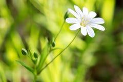 De lentebloem op een achtergrond van groen, de versheid van de ochtend, close-up royalty-vrije stock fotografie