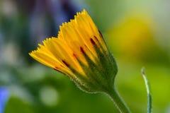 De lentebloem in Spanje Royalty-vrije Stock Afbeelding