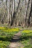 De de lentebloem voerde sleep stock afbeelding