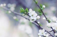 De lentebloemen Stock Afbeeldingen
