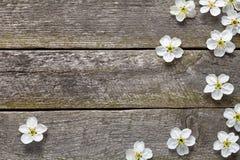 De lentebloemen Royalty-vrije Stock Afbeelding