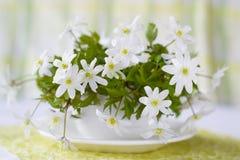 De lentebloemen Royalty-vrije Stock Afbeeldingen