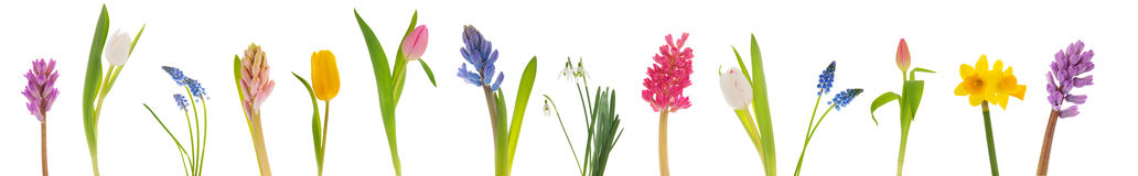 De lentebloemen Royalty-vrije Stock Fotografie