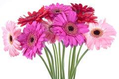 De lentebloemen Stock Afbeelding