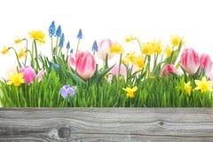 De lentebloemen Stock Foto's